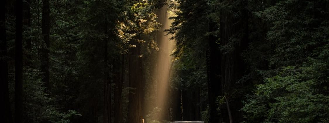road through forest